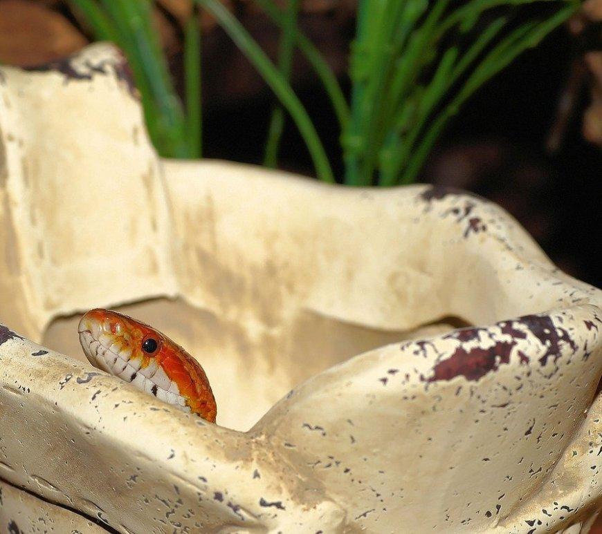 smallest pet snakes